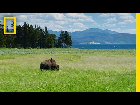 Spend a Relaxing Hour in Yellowstone's Beautiful Landscapes   National Geographic