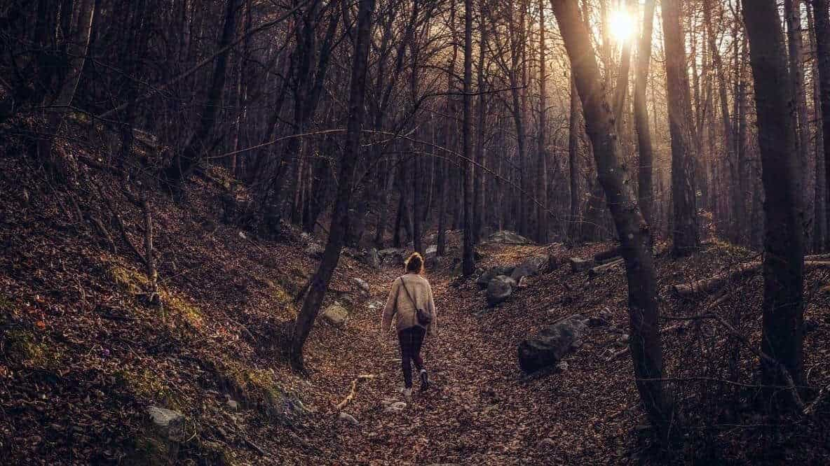 Forest-Bathing-Happiness-Habit