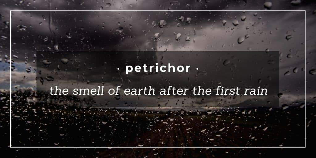 petrichor - smell of earth after first rain